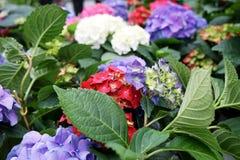 Αφθονία των ζωηρόχρωμων λουλουδιών Στοκ εικόνες με δικαίωμα ελεύθερης χρήσης