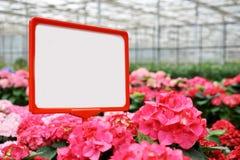 Αφθονία των ζωηρόχρωμων λουλουδιών Στοκ Εικόνα