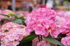 Αφθονία των ζωηρόχρωμων λουλουδιών Στοκ φωτογραφία με δικαίωμα ελεύθερης χρήσης