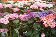 Αφθονία των ζωηρόχρωμων λουλουδιών Στοκ Φωτογραφίες