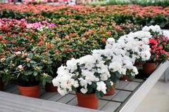 Αφθονία των ζωηρόχρωμων λουλουδιών Στοκ εικόνα με δικαίωμα ελεύθερης χρήσης
