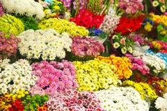Αφθονία των ζωηρόχρωμων λουλουδιών Στοκ Εικόνες