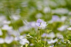 Αφθονία των μικρών λουλουδιών Στοκ Φωτογραφίες