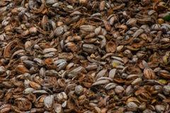 Αφθονία των παλαιών καφετιών φλουδών καρύδων ` s Στοκ Εικόνες