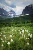 Αφορτε τη χλόη το βουνό στο εθνικό πάρκο 3 παγετώνων Στοκ Εικόνες
