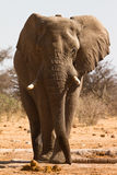 Αφρική στοκ φωτογραφία με δικαίωμα ελεύθερης χρήσης