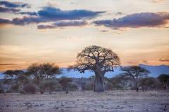 Αφρική tarangire Στοκ Φωτογραφία
