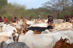 Αφρικανικά άτομα και βοοειδή Στοκ Φωτογραφίες