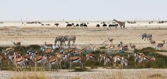 Αφρικανικά ζώα κοντά σε ένα waterhole Στοκ Φωτογραφίες