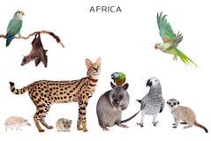 Αφρικανικά ζώα στο λευκό Στοκ Εικόνα