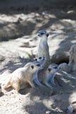 αφρικανικά ζώα Στοκ Εικόνες