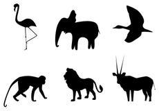 αφρικανικά ζώα διανυσματική απεικόνιση