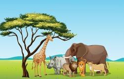 Αφρικανικά ζώα Στοκ Φωτογραφία