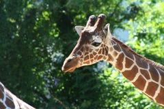 αφρικανικά ζώα Στοκ εικόνα με δικαίωμα ελεύθερης χρήσης