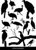 Αφρικανικά πουλιά και αρπακτικά πτηνά διανυσματική απεικόνιση