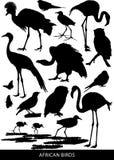 Αφρικανικά πουλιά και αρπακτικά πτηνά ελεύθερη απεικόνιση δικαιώματος