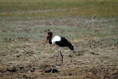 Αφρικανικά πουλιά νερού Στοκ φωτογραφία με δικαίωμα ελεύθερης χρήσης