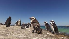 Αφρικανικά penguins στους παράκτιους βράχους φιλμ μικρού μήκους