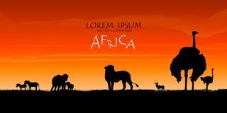 αφρικανική άγρια φύση σειράς φύσης ανασκόπησης ενάντια ανασκόπησης μπλε σύννεφων πεδίων άσπρο σε wispy ουρανού φύσης χλόης πράσιν Στοκ εικόνες με δικαίωμα ελεύθερης χρήσης