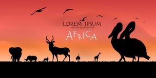 αφρικανική άγρια φύση σειράς φύσης ανασκόπησης ενάντια ανασκόπησης μπλε σύννεφων πεδίων άσπρο σε wispy ουρανού φύσης χλόης πράσιν Στοκ Εικόνα