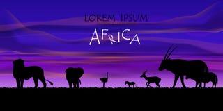 αφρικανική άγρια φύση σειράς φύσης ανασκόπησης ενάντια ανασκόπησης μπλε σύννεφων πεδίων άσπρο σε wispy ουρανού φύσης χλόης πράσιν Στοκ εικόνα με δικαίωμα ελεύθερης χρήσης