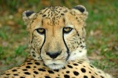 αφρικανική άγρια φύση Στοκ Φωτογραφίες