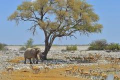 Αφρικανική άποψη σαφάρι Στοκ Εικόνες