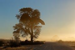 Αφρικανική ανατολή με το σκιαγραφημένο δέντρο Στοκ Εικόνα