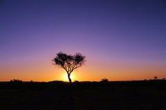 Αφρικανική ανατολή Στοκ Εικόνες