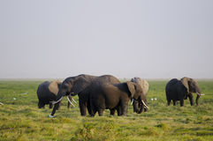 Αφρικανική οικογένεια ελεφάντων στοκ φωτογραφία