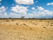 αφρικανική σαβάνα Στοκ Φωτογραφία
