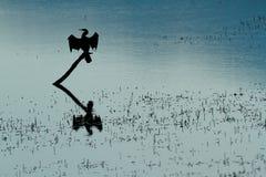 Αφρικανική σκιαγραφία darter Στοκ Φωτογραφίες