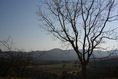 αφρικανική όψη 01 Στοκ φωτογραφία με δικαίωμα ελεύθερης χρήσης