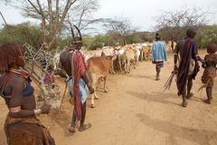 Αφρικανικοί λαοί και βοοειδή Στοκ Εικόνα