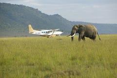 Αφρικανικοί ελέφαντας και αεροπλάνο από τα λιβάδια της συντήρησης Lewa, Κένυα, Αφρική στοκ φωτογραφίες με δικαίωμα ελεύθερης χρήσης