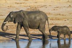 Αφρικανικοί μητέρα και μόσχος ελεφάντων Στοκ εικόνα με δικαίωμα ελεύθερης χρήσης