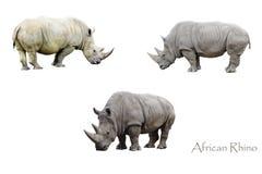 Αφρικανικοί ρινόκεροι Στοκ φωτογραφία με δικαίωμα ελεύθερης χρήσης