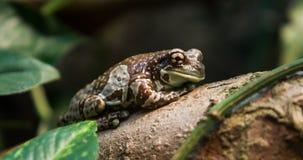Αφρικανικός βάτραχος Στοκ φωτογραφία με δικαίωμα ελεύθερης χρήσης