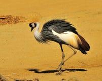 αφρικανικός γερανός στοκ φωτογραφίες