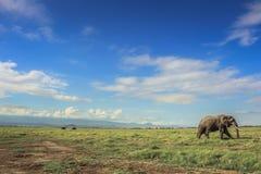 Αφρικανικός ελέφαντας στο masai mara Κένυα Στοκ Εικόνα