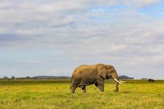 Αφρικανικός ελέφαντας στο masai mara Κένυα στοκ εικόνες