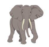 αφρικανικός ελέφαντας ελεύθερη απεικόνιση δικαιώματος