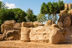 Αφρικανικός ελέφαντας από τους κίτρινους βράχους στον ζωικός-φιλικό ζωολογικό κήπο, Ισπανία Στοκ φωτογραφίες με δικαίωμα ελεύθερης χρήσης