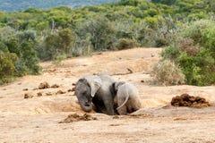 αφρικανικός ελέφαντας θάμνων Στοκ Φωτογραφίες