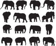 Αφρικανικός ελέφαντας και ασιατικό περίγραμμα σκιαγραφιών ελεφάντων Στοκ φωτογραφία με δικαίωμα ελεύθερης χρήσης