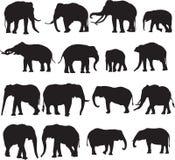 Αφρικανικός ελέφαντας και ασιατικό περίγραμμα σκιαγραφιών ελεφάντων Στοκ Φωτογραφίες