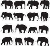 Αφρικανικός ελέφαντας και ασιατικό περίγραμμα σκιαγραφιών ελεφάντων Στοκ Εικόνες