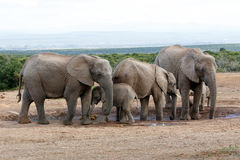 Αφρικανικός ελέφαντας Familie του Μπους Στοκ φωτογραφία με δικαίωμα ελεύθερης χρήσης