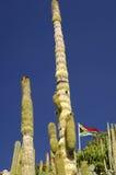 αφρικανικός νότος σημαιών cat Στοκ Φωτογραφίες
