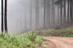 Αφρικανικό δάσος στην ομίχλη Στοκ Εικόνες